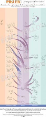 Schéma de développement moteur - poster avec attache mural et tube